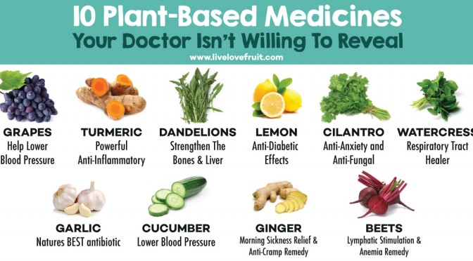 """This Doctor Opened Up a """"Farmacy"""" to Use Food as Medicine 0Plant-based-medicines-672x372"""