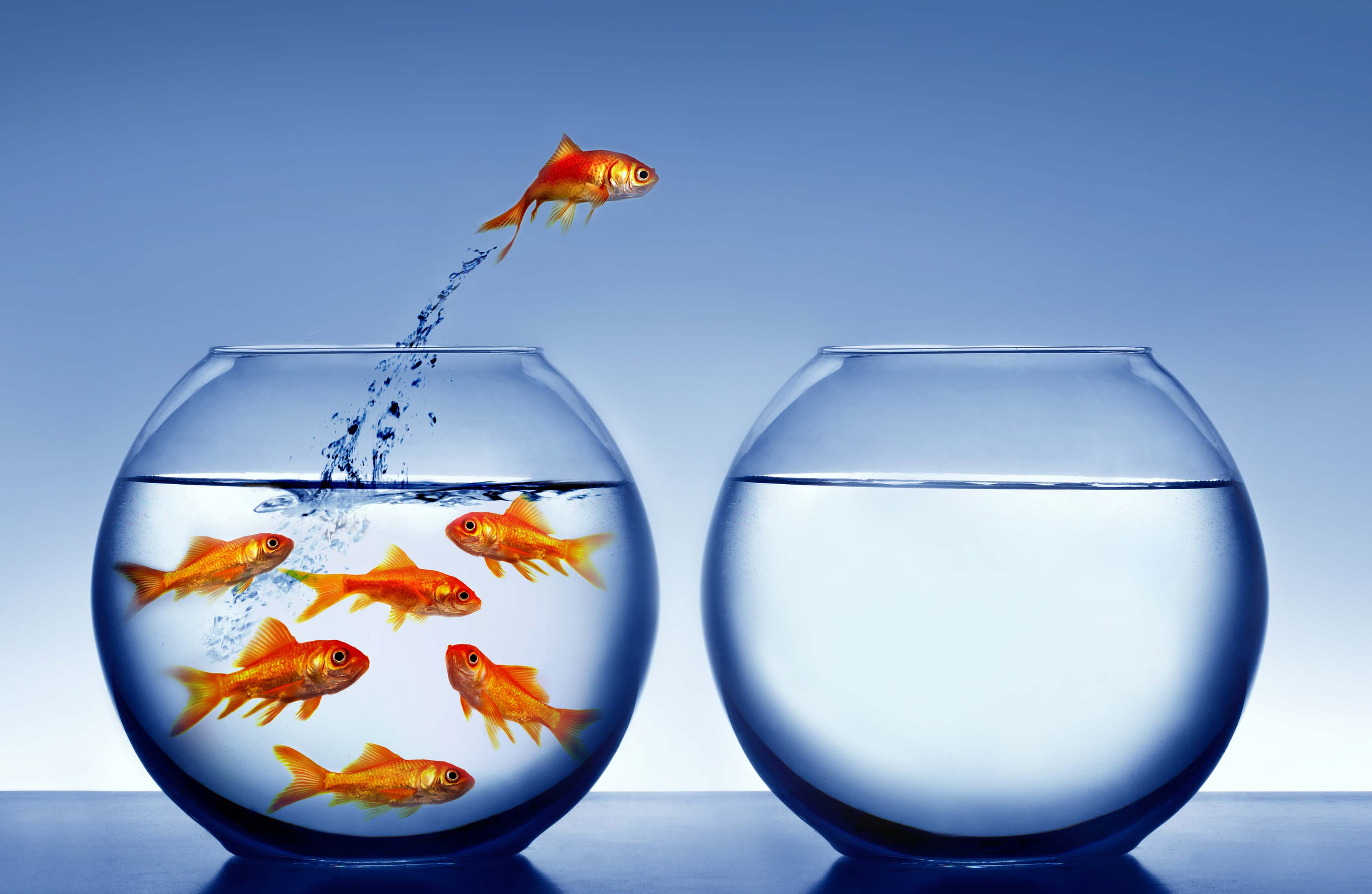 Chakra Energy Meditation For Beginners Fishy-cropped