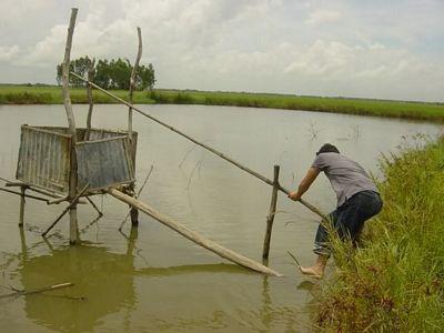 Ngôi nhà nhỏ trên đồng bằng sông Cửu Long 116833-big_VN_TPT_Cau_Tom1aa
