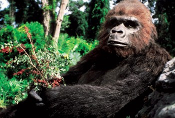 КИНГ КОНГ ЖИВ ! / King Kong lives ! (1986) Линда Гамильтон Fc976b288994744