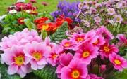 Цветы (flowers) 3ea375419035334