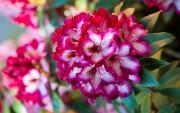 Цветы (flowers) B26a4b419035347