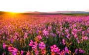 Цветы (flowers) D3a99d419035352