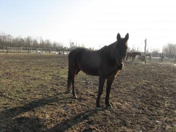 Miješana pasmina konja B2be5f460793432