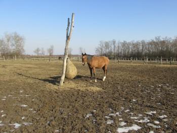 Miješana pasmina konja Beba73460794774