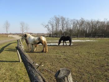 Miješana pasmina konja 09a133460805372