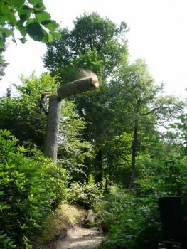 Izrada ogrijevnog drva - Page 13 2fb420462708016