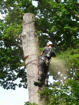 Izrada ogrijevnog drva - Page 13 Bd7b24462708005