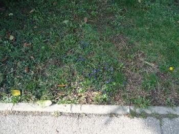 Vrtne biljke                        3ece71468969255