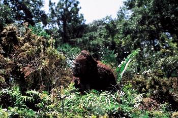 КИНГ КОНГ ЖИВ ! / King Kong lives ! (1986) Линда Гамильтон 2059ca289325636