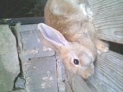 Слики од вашите зајаци 700b46136331553