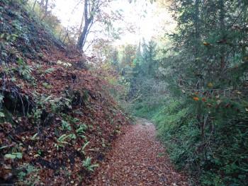 Listopadne šume 1168b3443997140