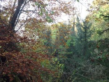Listopadne šume 95e2eb443997424