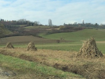 Ručna žetva kukuruzovine 6215e7514992269