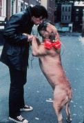 Рокки / Rocky (Сильвестр Сталлоне, 1976) 9cdefb518340037