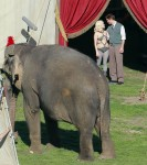 Water for Elephants : Photos  + Vidéos du tournage... - Page 12 B1b58b115368046