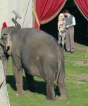 Water for Elephants : Photos  + Vidéos du tournage... - Page 12 043e76115368755