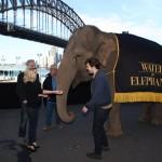 Conférence de Presse WFE à Sydney - 6 mai 2011  Fd6151131893099