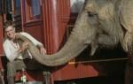 Still Water for Elephants... 1eea65113009650