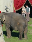 Water for Elephants : Photos  + Vidéos du tournage... - Page 12 Dd9aec115368010