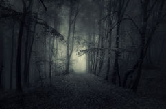 1.0 The Negative One - Old man Story Dark-path-haunted-woods-night-forest-fog-49412886