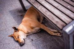 Juego lingüístico Perro-que-duerme-debajo-de-banco-34618443