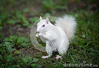 Animal de martine - 2 mars trouvé par le gros nounours et le ptit singe %C3%A9cureuil-blanc-34252870