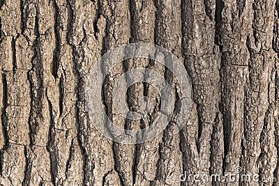 Consigli per piantina ancora sconosciuta - Pagina 2 Corteccia-di-albero-della-quercia-4089687