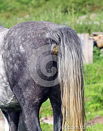 Hagamos una historia - Página 4 Extremo-posterior-de-un-caballo-o-de-un-culo-mierda-del-caballo-48837835