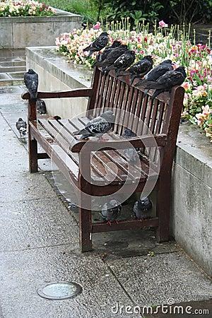 Comment emmerder son voisin Pigeons-roosting-sur-un-banc-808291