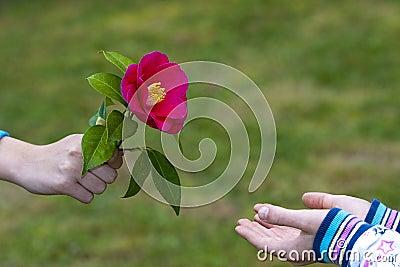 Nos amies les fleurs (Symbolisme) Symbole-de-l-amiti%C3%A9-et-de-l-amour-19407273