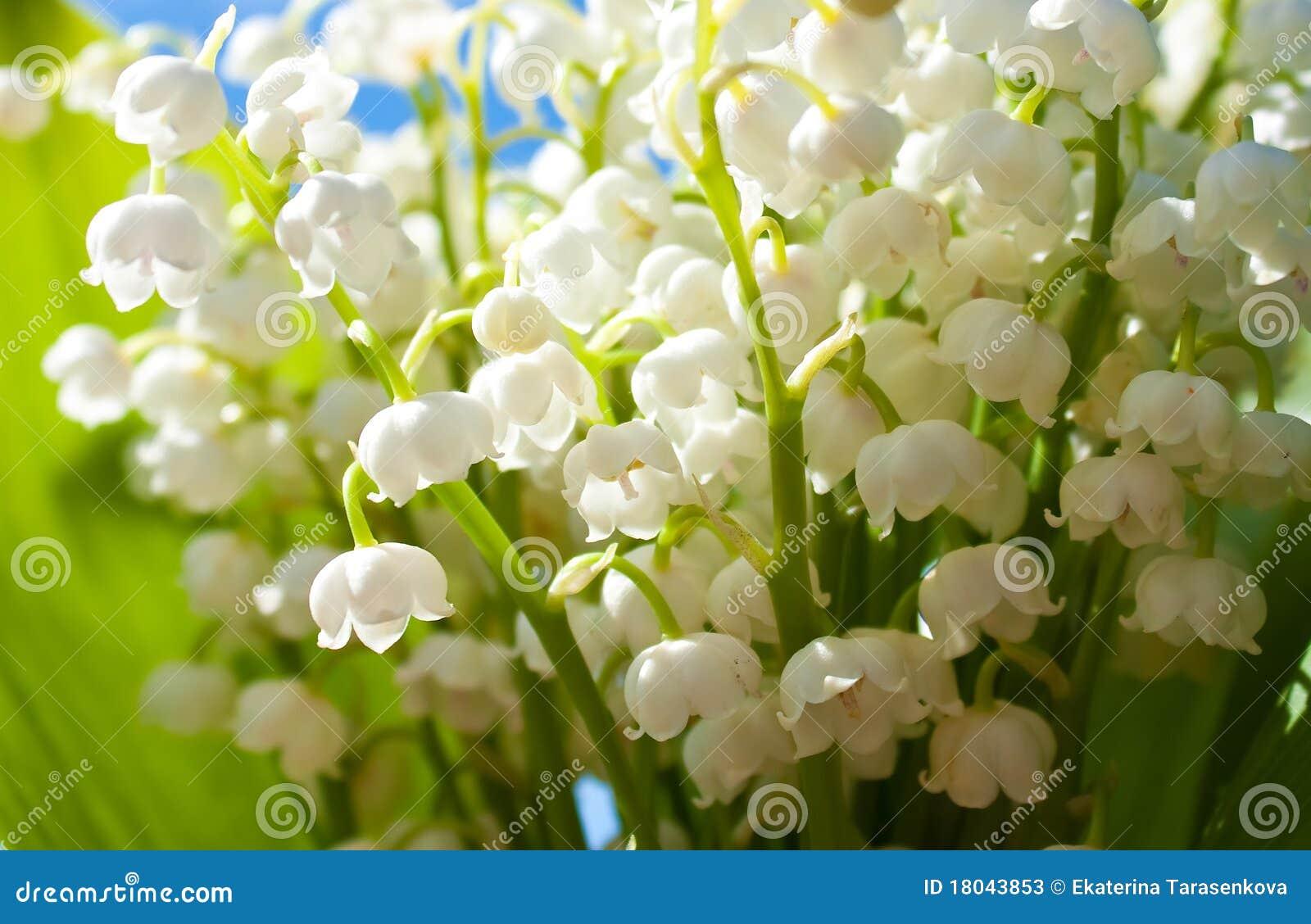 LA PRIMAVERA LLEGO¡!! Flores-hermosas-del-lirio-de-los-valles-18043853