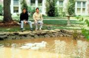 Человек дождя / Rain Man (Том Круз, Дастин Хоффман, Валерия Голино, 1988) 792330630593723