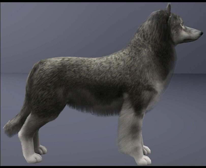 Grey Wolf by Arisuka MTS_Arisuka-1294413-WolfHeadnFullbody