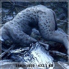 Gatos y vampiros en el bosque :P 1445dd62e8b067b30db97c5b3bcde10eo