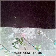 Bonsai operculicaria secandose 2a4f88a21f828b9cd090408d6d10ee14o