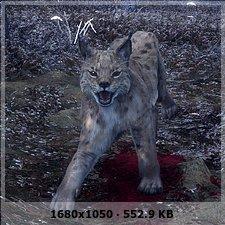 Gatos y vampiros en el bosque :P 2db46e8bff6912fb3fff1e8af5a155a5o