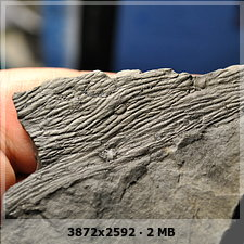 Asolanus Wood, 1860. - Page 2 39bb6008c1f35de37c7a49362458b177o