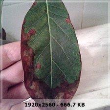 Mi palta necesita nutrientes 3c0964ef91f77d4ee05b7eb85353626fo