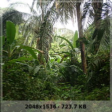 veracruz digging and prehispanic pyramid discovery and unexplored caves!!! 55599d2b6eed92766b943dfd2b5010bdo