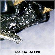 Microscopio Usb para ver agujas ( y mas cosas)  64e8e81dd259d7f697a1795065eef279o