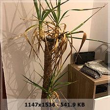 ¿Que le pasa a mi planta? 72b1a55accdd6938dd9b440d2a51dcabo