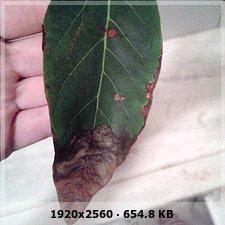 Mi palta necesita nutrientes 820adedb87592909aeafef0a0a65338co