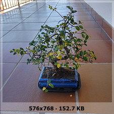 Abono bonsais y otras dudas (fotos) 8e5a7f932a2f6d9442fa4c874ccb7e06o