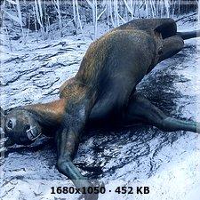 Gatos y vampiros en el bosque :P F2d9e4ada0c8479a2f6406e670be4cc2o