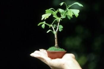 Come avete iniziato a fare bonsai? - Pagina 3 C9c21a695712313