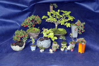 Come avete iniziato a fare bonsai? - Pagina 3 5b845f695712113