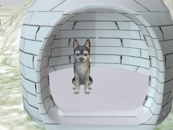 Собаки и кошки MTS2_Munchies_827633_h2