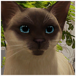 Собаки и кошки MTS2_Hopelessly_1053870_cat