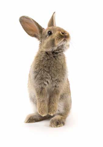 Forumaš iznad u liku životinje - Page 5 8-faror-hare
